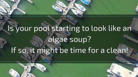 green algae mustard algae black algae troubleshooting pools 25 common annoying pool water problems