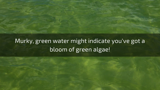 green algae troubleshooting pools guide 25 most common pool water problems ultimate how to step by step