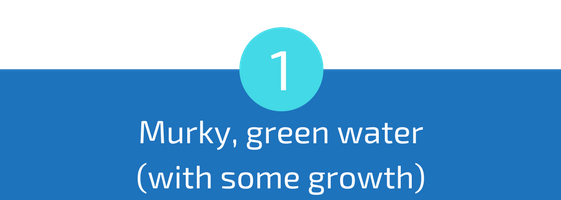 murky green water with some growth troubleshooting pools guide 25 most common pool water problems