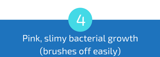 pink slimy bacterial growth in troubleshooting pools guide 25 most common pool water problems