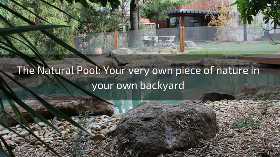 pool safety solutions cheap pool fence inspector fast ceriticate of compliance sydney penshurst peakhurst lugarno taren point pool designs 5